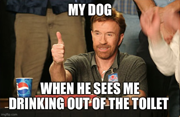 Chuck Norris Approves |  MY DOG; WHEN HE SEES ME DRINKING OUT OF THE TOILET | image tagged in memes,chuck norris approves,chuck norris | made w/ Imgflip meme maker