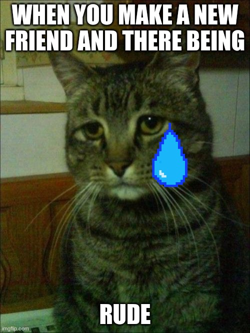 Depressed Cat |  WHEN YOU MAKE A NEW FRIEND AND THERE BEING; RUDE | image tagged in memes,depressed cat | made w/ Imgflip meme maker