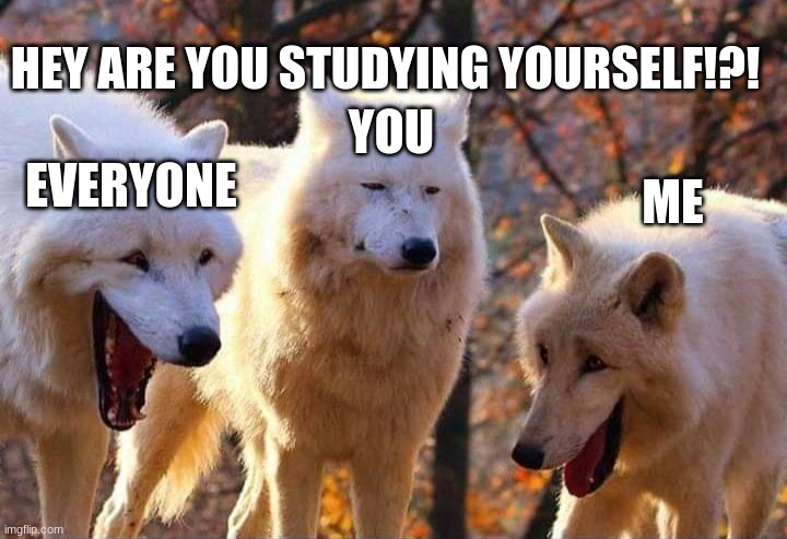 what are you doing? |  HEY ARE YOU STUDYING YOURSELF!?! YOU; ME; EVERYONE | image tagged in laughing wolf,omg,everyone | made w/ Imgflip meme maker