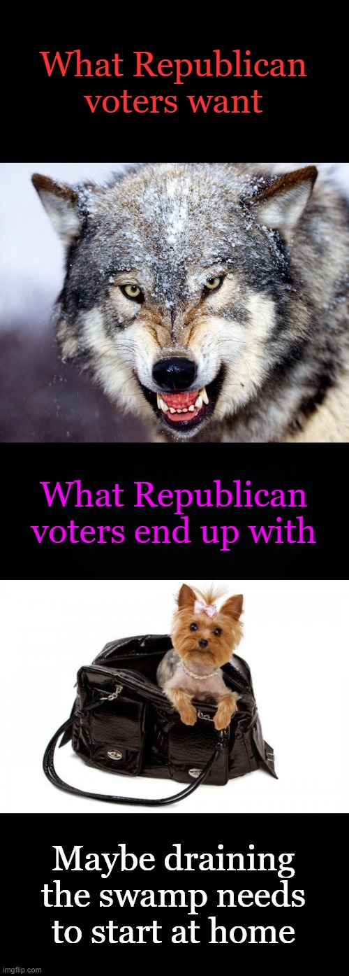 Message to Congressional Republicans:  Fight for us, Damnit |  What Republican voters want; What Republican voters end up with; Maybe draining the swamp needs to start at home | image tagged in timber wolf,weak republicans,cowards,weak | made w/ Imgflip meme maker