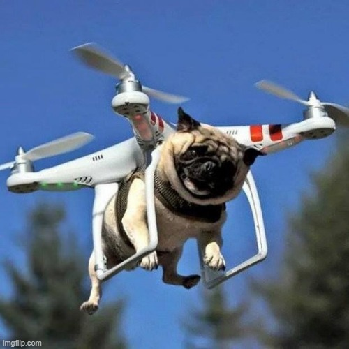 image tagged in flying pug | made w/ Imgflip meme maker