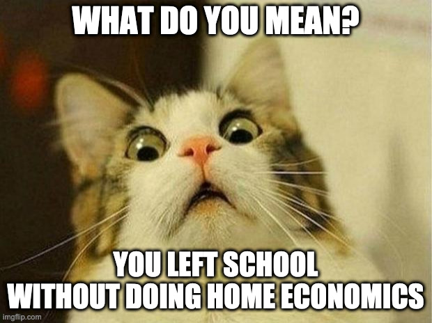 What do you mean? |  WHAT DO YOU MEAN? YOU LEFT SCHOOL WITHOUT DOING HOME ECONOMICS | image tagged in memes,scared cat | made w/ Imgflip meme maker