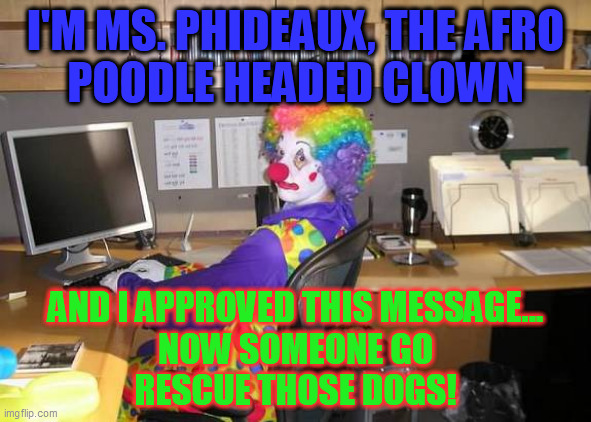 clown computer | I'M MS. PHIDEAUX, THE AFRO POODLE HEADED CLOWN AND I APPROVED THIS MESSAGE... NOW SOMEONE GO RESCUE THOSE DOGS! | image tagged in clown computer | made w/ Imgflip meme maker