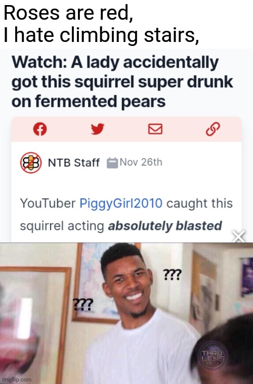 This was not on my 2020 bingo card. |  Roses are red, I hate climbing stairs, | image tagged in black guy confused,2020,funny,drunk,squirrel,memes | made w/ Imgflip meme maker