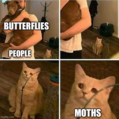 Sad Cat Holding Dog |  BUTTERFLIES; PEOPLE; MOTHS | image tagged in sad cat holding dog | made w/ Imgflip meme maker