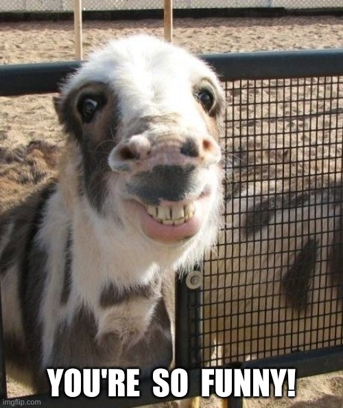 Smiling Donkey: You're So Funny! |  YOU'RE  SO  FUNNY! | image tagged in donkey,smiling,laughing,you're,funny,happy | made w/ Imgflip meme maker