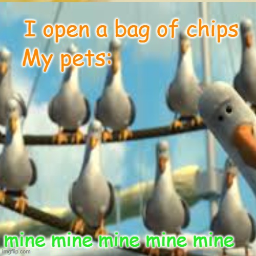 I open a bag of chips; My pets:; mine mine mine mine mine | image tagged in memes | made w/ Imgflip meme maker
