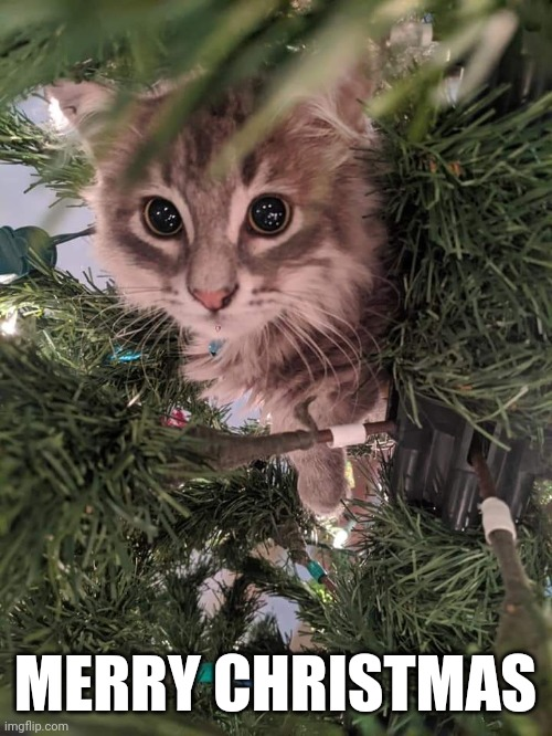 Super cute kitten in a Christmas tree |  MERRY CHRISTMAS | image tagged in christmas tree kitten,cute,kawaii,kitten,merry christmas,christmas | made w/ Imgflip meme maker