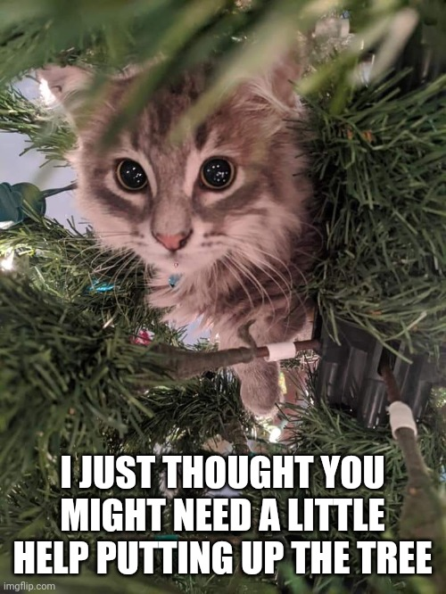 Super cute kitten - I just thought you might need a little help putting up the tree |  I JUST THOUGHT YOU MIGHT NEED A LITTLE HELP PUTTING UP THE TREE | image tagged in christmas tree kitten,cute,kitten,kawaii,christmas,memes | made w/ Imgflip meme maker
