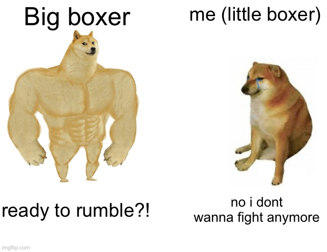 Buff Doge vs. Cheems |  Big boxer; me (little boxer); ready to rumble?! no i dont wanna fight anymore | image tagged in memes,buff doge vs cheems | made w/ Imgflip meme maker