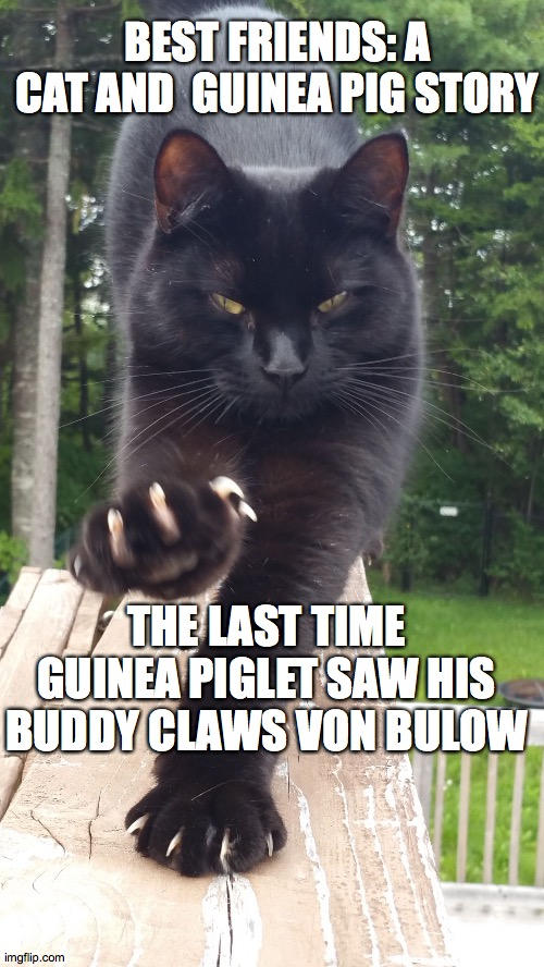 best friends |  BEST FRIENDS: A CAT AND  GUINEA PIG STORY; THE LAST TIME GUINEA PIGLET SAW HIS BUDDY CLAWS VON BULOW | image tagged in friends,h5ndym5n,claws von bulow,meme,blood,black cat | made w/ Imgflip meme maker