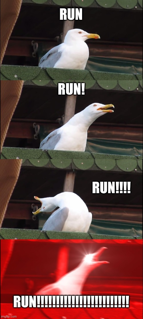 RUN RUN! RUN!!!! RUN!!!!!!!!!!!!!!!!!!!!!!!! | image tagged in memes,inhaling seagull | made w/ Imgflip meme maker