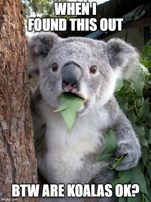 me |  WHEN I FOUND THIS OUT; BTW ARE KOALAS OK? | image tagged in memes,surprised koala | made w/ Imgflip meme maker
