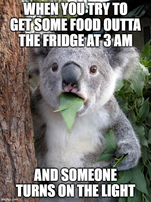 huh what happen |  WHEN YOU TRY TO GET SOME FOOD OUTTA THE FRIDGE AT 3 AM; AND SOMEONE TURNS ON THE LIGHT | image tagged in memes,surprised koala,cute | made w/ Imgflip meme maker
