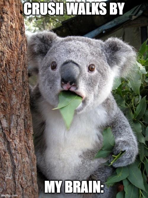 Surprised Koala |  CRUSH WALKS BY; MY BRAIN: | image tagged in memes,surprised koala | made w/ Imgflip meme maker