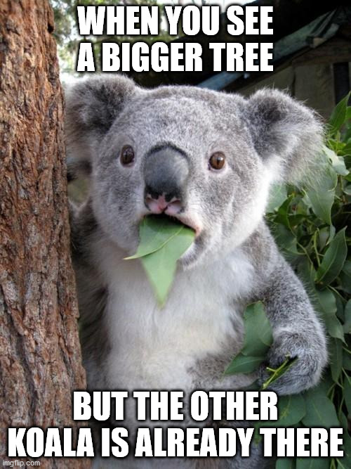 who wants to be the STAR |  WHEN YOU SEE A BIGGER TREE; BUT THE OTHER KOALA IS ALREADY THERE | image tagged in memes,surprised koala | made w/ Imgflip meme maker