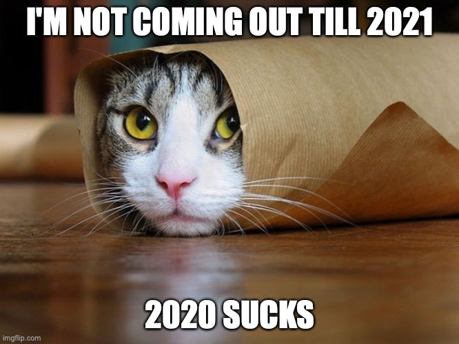 2020 Can Bite Me |  I'M NOT COMING OUT TILL 2021; 2020 SUCKS | image tagged in kitten wrap,coronavirus,2020,funny memes,cats | made w/ Imgflip meme maker