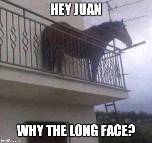 Juan the Horse with the Long Face | HEY JUAN WHY THE LONG FACE? | image tagged in juan | made w/ Imgflip meme maker