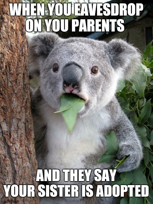 Surprised Koala Meme |  WHEN YOU EAVESDROP ON YOU PARENTS; AND THEY SAY YOUR SISTER IS ADOPTED | image tagged in memes,surprised koala | made w/ Imgflip meme maker
