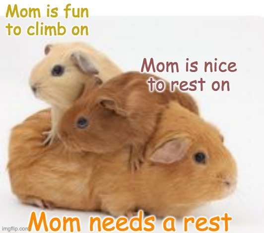Parenthood |  Mom is fun to climb on; Mom is nice to rest on; Mom needs a rest | image tagged in guinea pig,cute,parenting | made w/ Imgflip meme maker