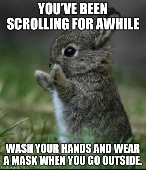 Cute Bunny |  YOU'VE BEEN SCROLLING FOR AWHILE; WASH YOUR HANDS AND WEAR A MASK WHEN YOU GO OUTSIDE. | image tagged in cute bunny,covid-19,wash your hands,mask | made w/ Imgflip meme maker