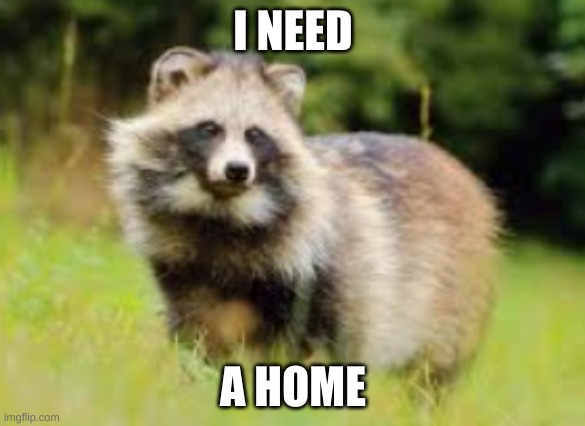 yez i could not stay in dog stream |  I NEED; A HOME | image tagged in racoon dog | made w/ Imgflip meme maker