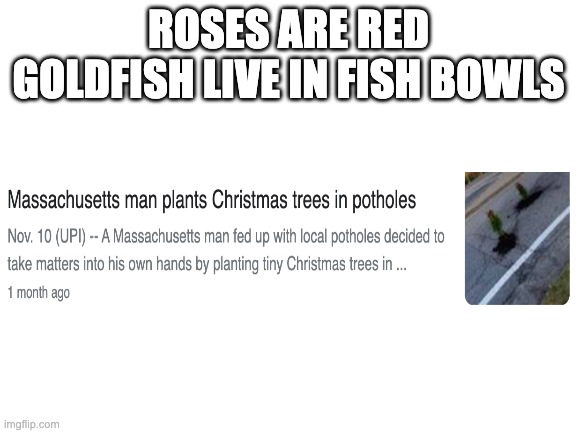 Blank White Template | ROSES ARE RED GOLDFISH LIVE IN FISH BOWLS | image tagged in blank white template | made w/ Imgflip meme maker