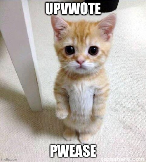 Cute Cat |  UPVWOTE; PWEASE | image tagged in memes,cute cat | made w/ Imgflip meme maker