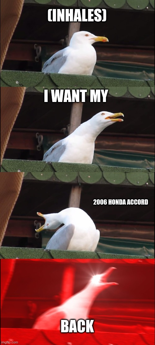 2006 Honda Accord Seagull Meme |  (INHALES); I WANT MY; 2006 HONDA ACCORD; BACK | image tagged in memes,inhaling seagull,fun,honda,2006,funny | made w/ Imgflip meme maker