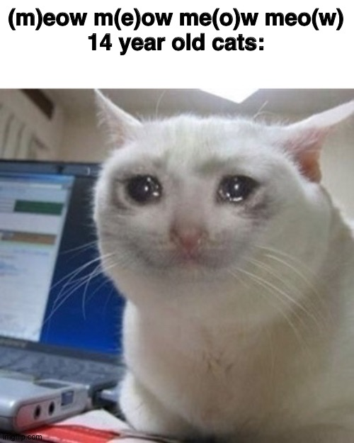 Crying cat |  (m)eow m(e)ow me(o)w meo(w)  14 year old cats: | image tagged in crying cat | made w/ Imgflip meme maker