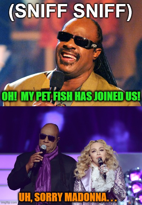 (SNIFF SNIFF) OH!  MY PET FISH HAS JOINED US! UH, SORRY MADONNA. . . | made w/ Imgflip meme maker