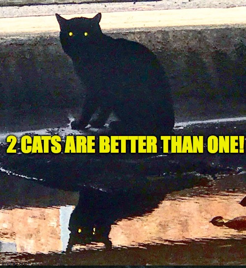 Two cats are better than one |  2 CATS ARE BETTER THAN ONE! | image tagged in black cat,reflection,love,purr,stray cat,pretty | made w/ Imgflip meme maker