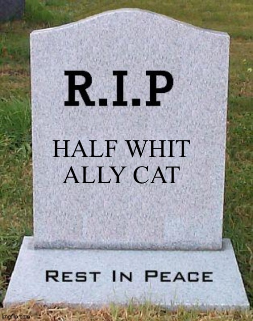 . |  HALF WHIT ALLY CAT | image tagged in rip headstone | made w/ Imgflip meme maker