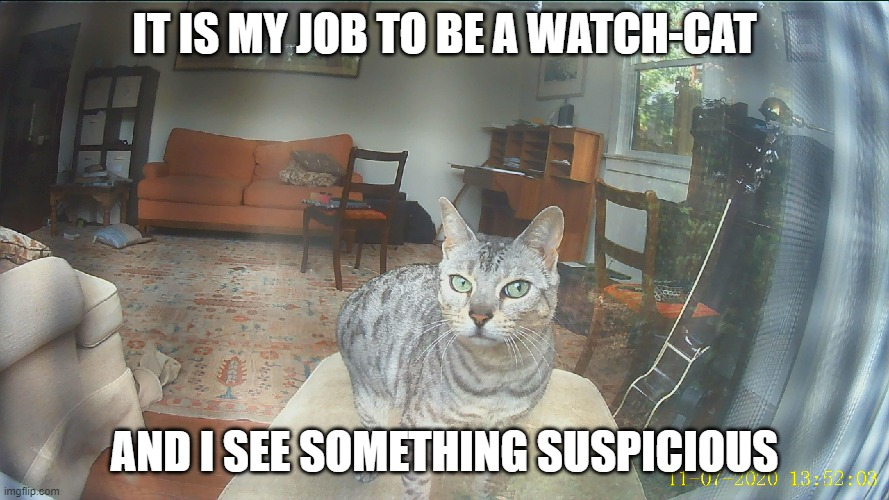 """It is my job to be a watch-cat..."" 