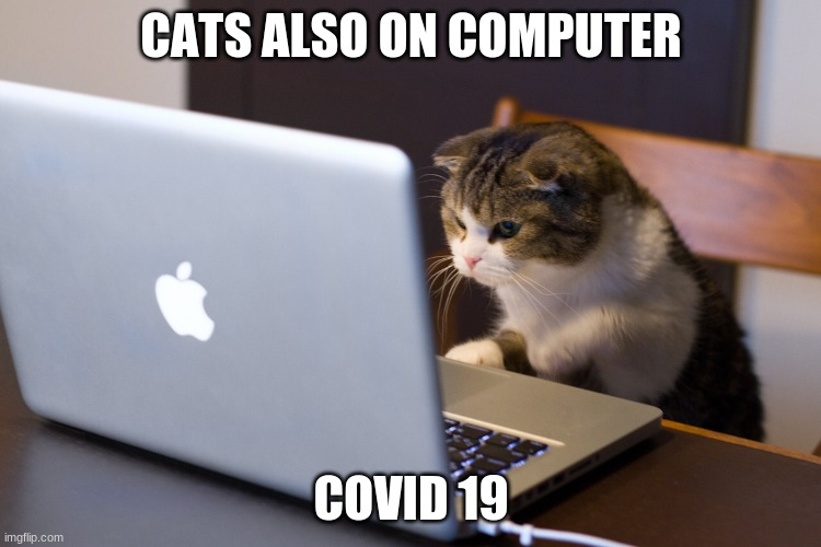 Cat on Computer |  CATS ALSO ON COMPUTER; COVID 19 | image tagged in cat on computer,coronavirus | made w/ Imgflip meme maker