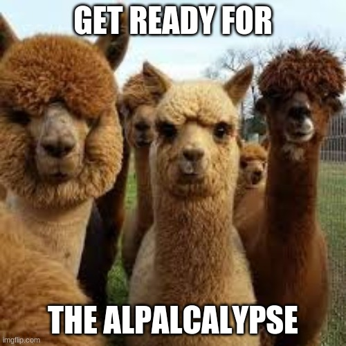 Alpalcalypse |  GET READY FOR; THE ALPALCALYPSE | image tagged in alpaca,apocalypse | made w/ Imgflip meme maker