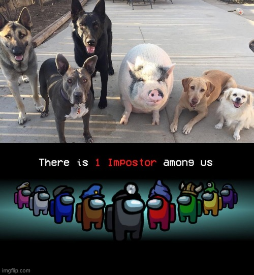 Everyone Here Is A Dog | image tagged in there is one impostor among us,impostor,doggos,piggy,cute,wholesome | made w/ Imgflip meme maker