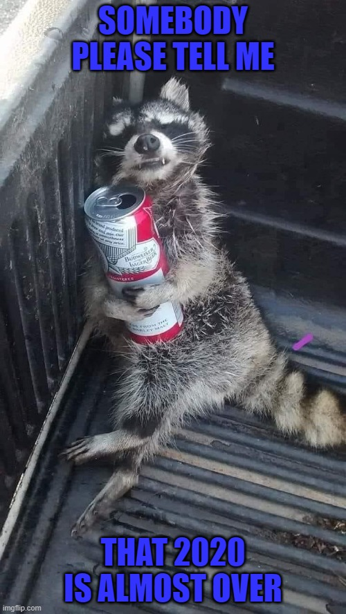 I'm so ready for 2020 to be over... |  SOMEBODY PLEASE TELL ME; THAT 2020 IS ALMOST OVER | image tagged in drunk raccoon,memes,2020 sucks,funny,raccoon,animals | made w/ Imgflip meme maker
