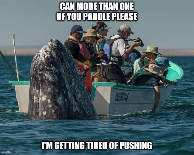 paddle land lovers |  CAN MORE THAN ONE OF YOU PADDLE PLEASE; I'M GETTING TIRED OF PUSHING | image tagged in whale | made w/ Imgflip meme maker