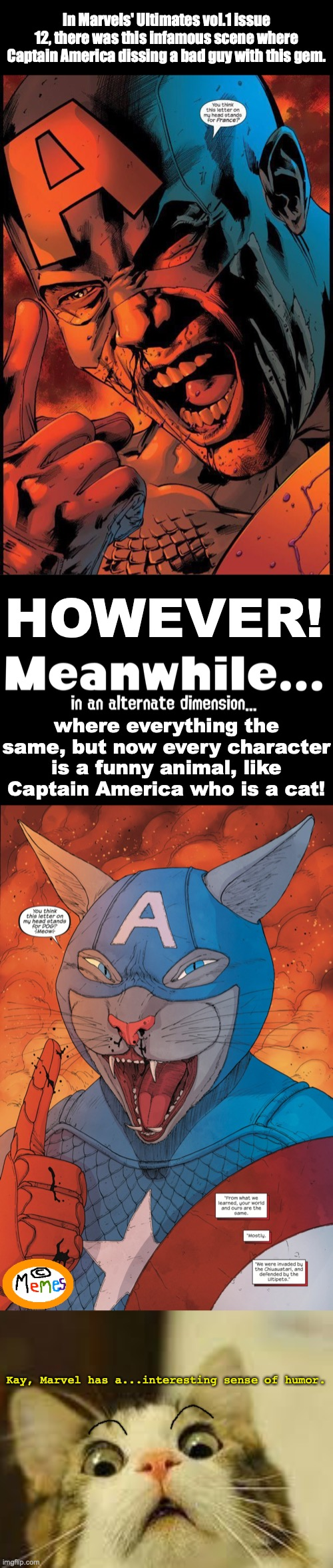 Same scene but different dimensions (Marvel Comics). |  In Marvels' Ultimates vol.1 issue 12, there was this infamous scene where Captain America dissing a bad guy with this gem. HOWEVER! where everything the same, but now every character is a funny animal, like Captain America who is a cat! Kay, Marvel has a...interesting sense of humor. | image tagged in shocked cat,marvel,captain america,cats,comics,wtf | made w/ Imgflip meme maker