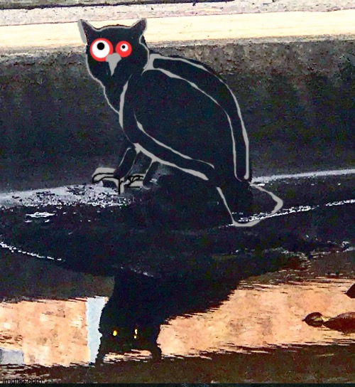 owly Cat | image tagged in black cat,owl,pun,crude,meow,cats | made w/ Imgflip meme maker