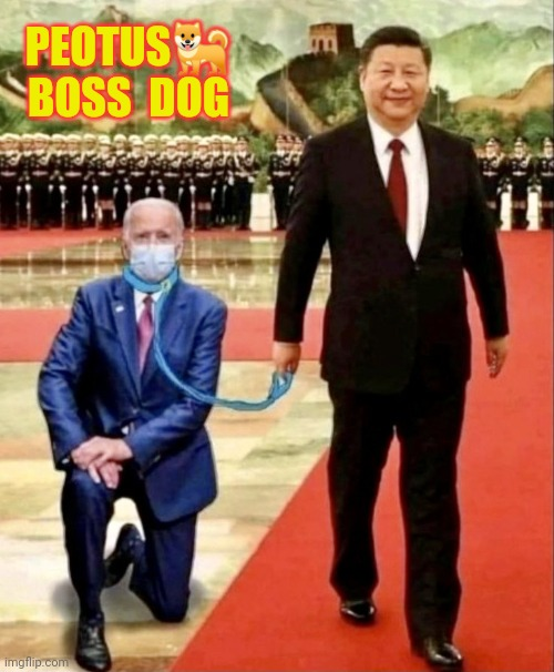 What's up Big Dog? #MadeinChina #NoMoJoe |  PEOTUS🐕 BOSS  DOG | image tagged in peotus boss dog,joe biden,made in china,potus,china,the great awakening | made w/ Imgflip meme maker