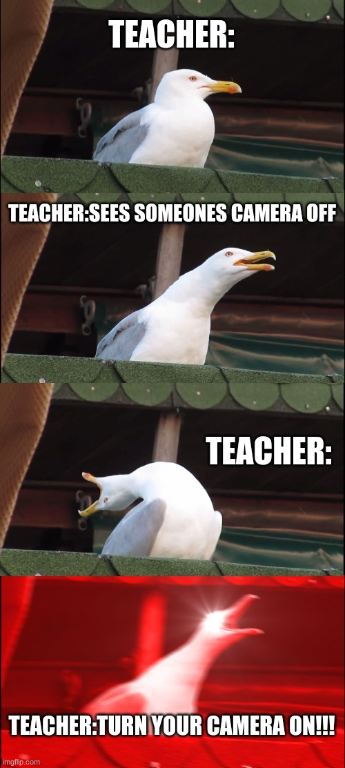 Inhaling Seagull Meme |  TEACHER:; TEACHER:SEES SOMEONES CAMERA OFF; TEACHER:; TEACHER:TURN YOUR CAMERA ON!!! | image tagged in memes,inhaling seagull | made w/ Imgflip meme maker