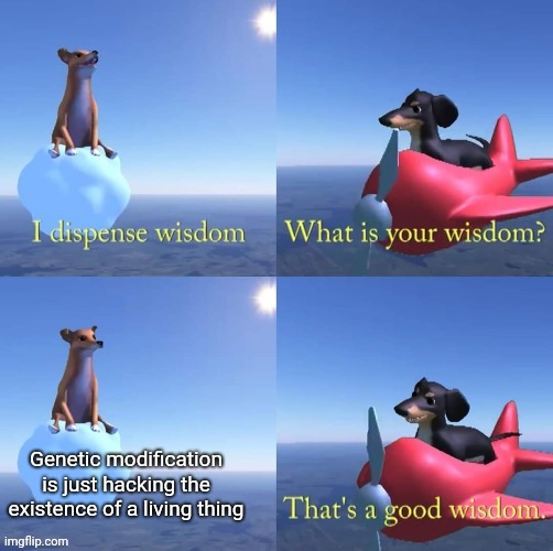 Wisdom dog |  Genetic modification is just hacking the existence of a living thing | image tagged in wisdom dog,memes,funny memes,funny,science,latest | made w/ Imgflip meme maker