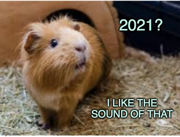 New beginning |  2021? I LIKE THE SOUND OF THAT | image tagged in cute,guinea pig,new year,2021 | made w/ Imgflip meme maker