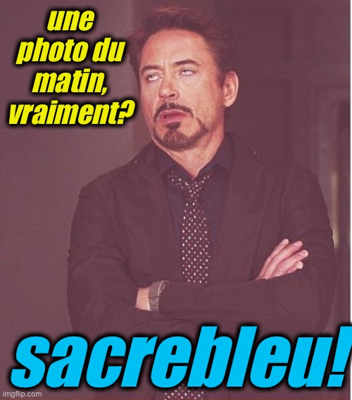 une photo du matin, vraiment? sacrebleu! | image tagged in memes,face you make robert downey jr | made w/ Imgflip meme maker