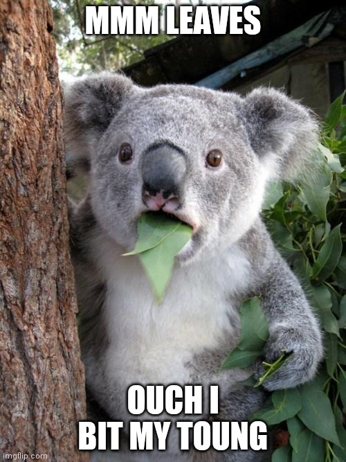 Surprised Koala |  MMM LEAVES; OUCH I BIT MY TOUNG | image tagged in memes,surprised koala | made w/ Imgflip meme maker