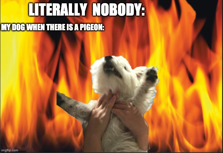 doge |  LITERALLY  NOBODY:; MY DOG WHEN THERE IS A PIGEON: | image tagged in doge | made w/ Imgflip meme maker