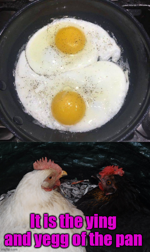 Two opposites that complement each other. |  It is the ying and yegg of the pan | image tagged in chickens,chinese,yang,eggs | made w/ Imgflip meme maker