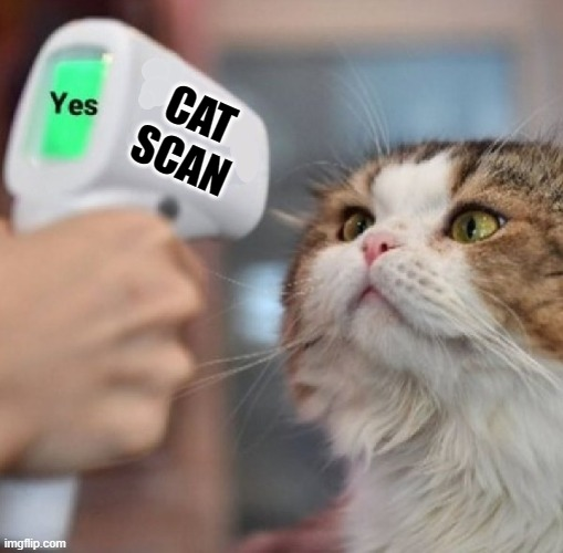 Well that confirms it |  CAT SCAN | image tagged in cats,temperature,puns,pandemic,funny cats,quarantine | made w/ Imgflip meme maker
